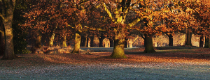 A photo of early morning sun among the Oaks and Plane trees of Sefton park, Liverpool.